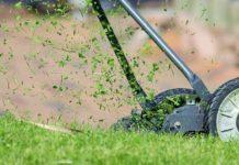 Mähen, Vertikutieren und Düngen:Den Rasen im Frühjahr fit für den Sommer machen