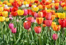 Frühling, wann es mir gefällt